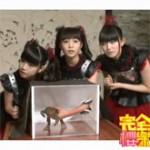 【海外の反応】完全櫻樂SakuraGaku~BABYMETAL(カエルわしづかみ編) を見た外国人の反応