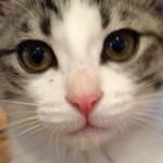 【海外の反応】日本の猫島を見た外国人の反応